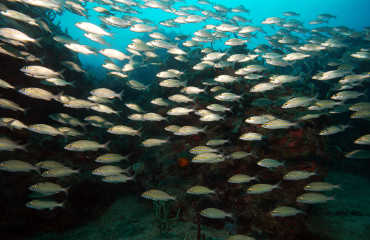 Diving with Scuba Safaris (2)